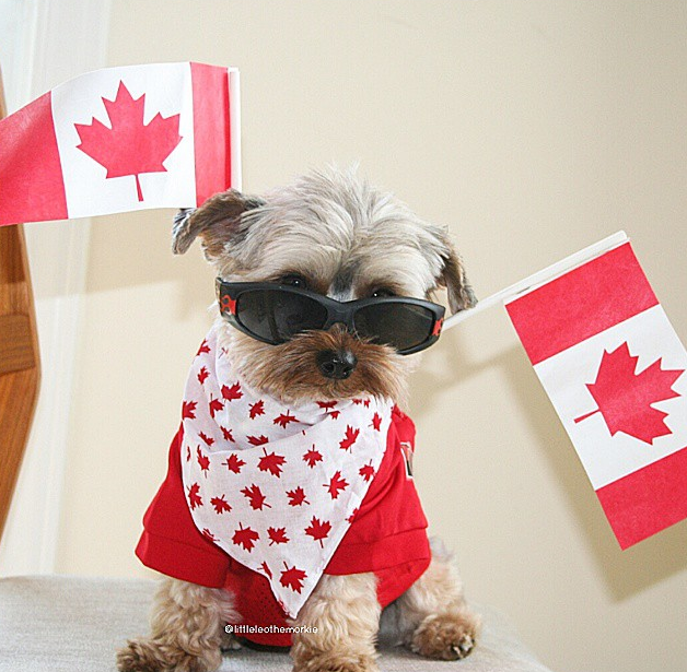 Leo is proud to be Canadian, and wishes everyone a fun day.