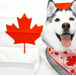 Maska is pretty psyched to be Canadian.