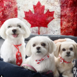 These three are proud to be Canadian.