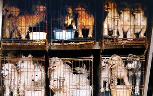 Animal Cruelty   Dog Fighting   Puppy Mill   Hoarding   ASPCA ChicagoNow
