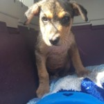 rescued-puppy