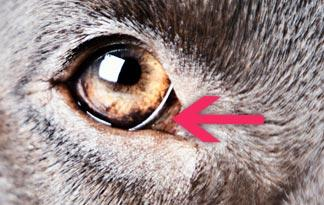 My Cats Third Eyelid Is Showing In One Eye