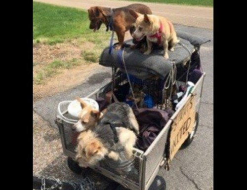 Homeless man and 11 rescued strays make the 2,000 mile journey to Indiana.