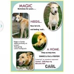 Bixby looking to help Magic find a forever home.