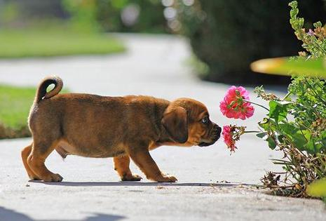 dog-sniffing-flowers2 - Stop and smell the flowers - Photos Unlimited