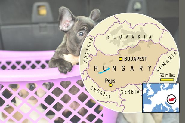 Hungary is a huge hub for puppy transportation into England.