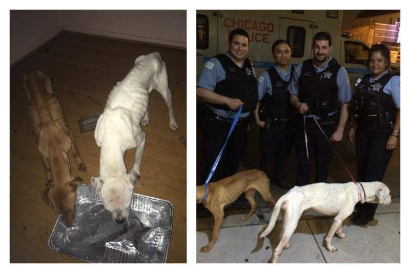 The Chicago Police Department discovered the dogs in an abandoned warehouse.