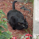 For the Scottish, a strange black cat that arrives at your porch means prosperity.