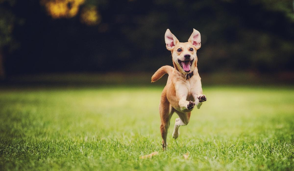 happy-dog-running-by-500px