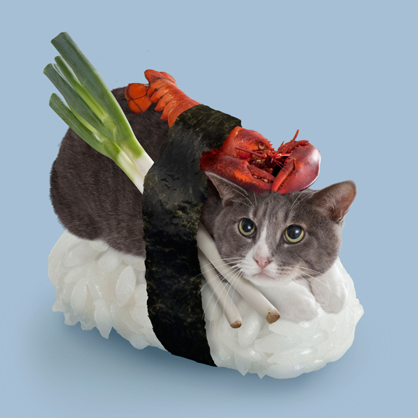 Nyaataro - Hero of all Sushi Cats, so he must carry the burden of being the vegetarian lobster.
