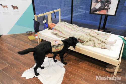 On November 3 a service dog from America's VetDogs demonstrates a nightmare interruption at Purina's Better With Pets Summit.