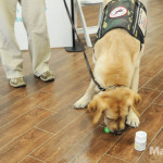 A service dog demonstrates item retrieval at Purina's Better With Pets Summit.