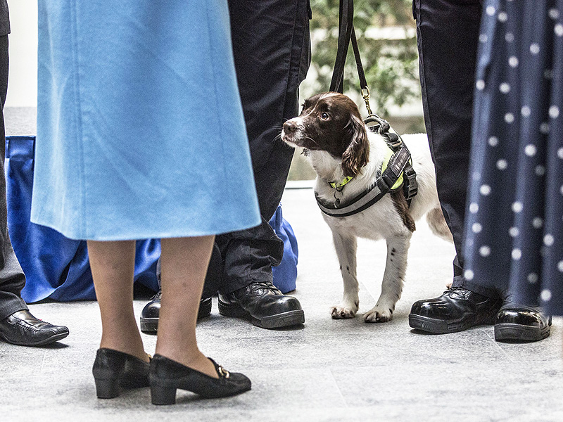 Ruby has been a detection dog for 5 Years.