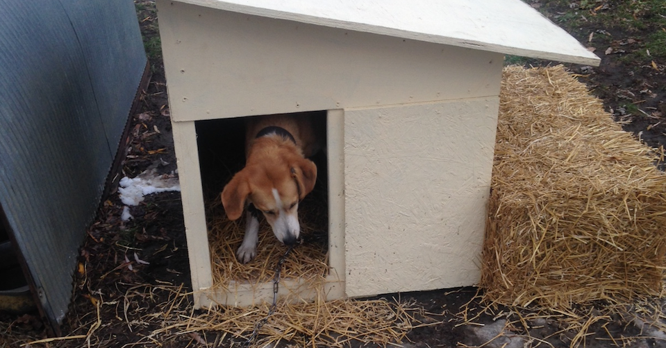 dog experiences the warmth of her first home after living without a