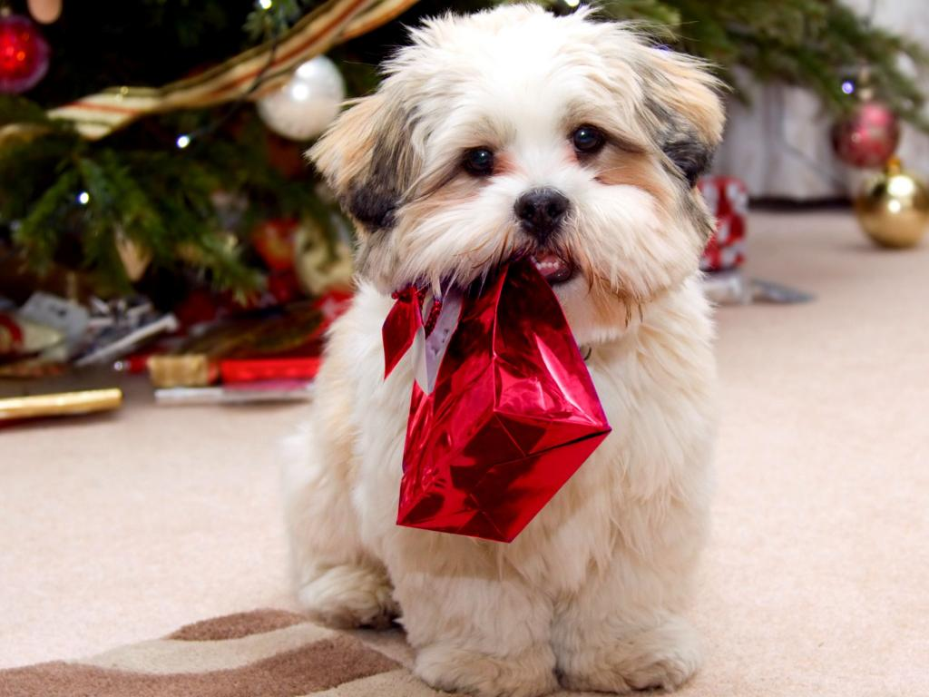 Christmas-Dog-Gifts