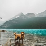 2E21909100000578-3305041-The_couple_started_an_Instagram_to_document_their_dog_s_adventur-a-27_1446750618249