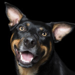 crazy-dog-lady-photographs-smiling-dogs-to-make-people-smile-too-14__700