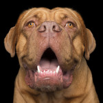 crazy-dog-lady-photographs-smiling-dogs-to-make-people-smile-too-2__700