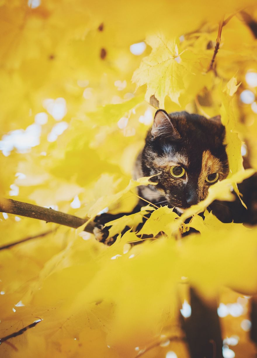 i-photographed-my-cat-throughout-the-seasons-11__880