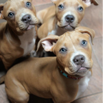 3 girls available for adoption