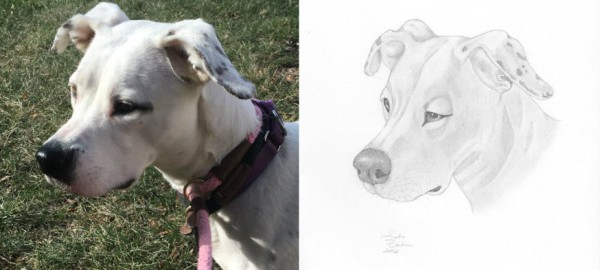 I-Draw-Portraits-of-Pets-to-Help-Save-the-Lives-of-Less-Fortunate-Animals__880-604x270