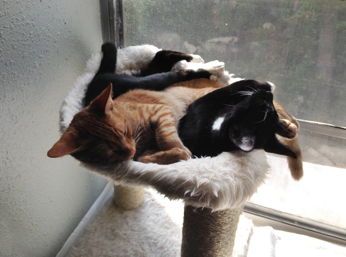 adopted-cats-sleeping-together-hammock-barnaby-stoche-11
