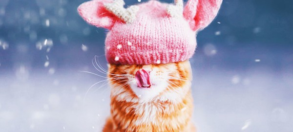 ginger-cat-photography-kotleta-cutlet-kristina-makeeva-hobopeeba-10-604x270