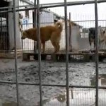 The dogs were found in horrible conditions