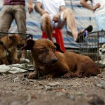 10,000 dogs gets slaughtered annually.