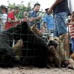 The dogs get tortured prior to being killed for tender meat.