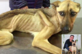 Starving rescue dog transformation