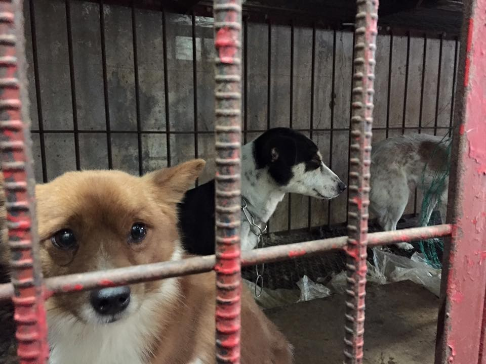 Chinese rescue dogs in a van