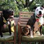 Pit Bull with his dog siblings