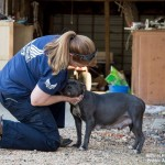 Pit Bull rescued from abandoned property
