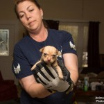 Chihuahua rescued from abandoned property