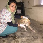 Nowzad clinic and shelter