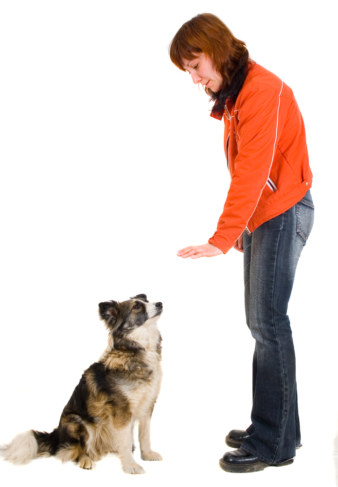 How To Train Your Deaf Dog
