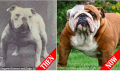 Dog breed transformation over 100 years of breeding