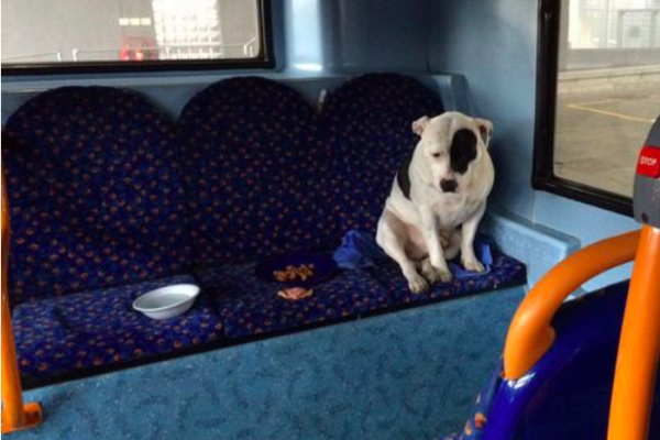 Dog abandoned on London bus