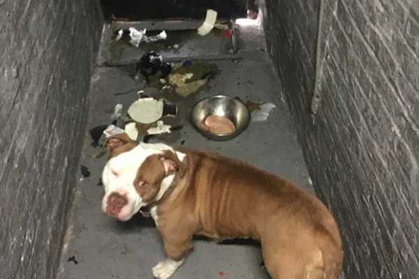 Dog abandoned basement apartment