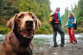 Hiking with your dog safety