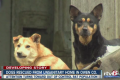 Dogs rescued from rat infested home Indiana