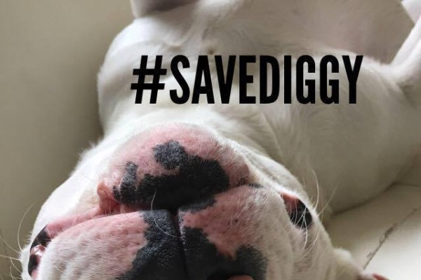 Save Diggy