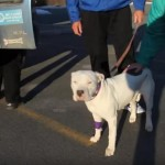 Will the Pit Bull leaving the vet