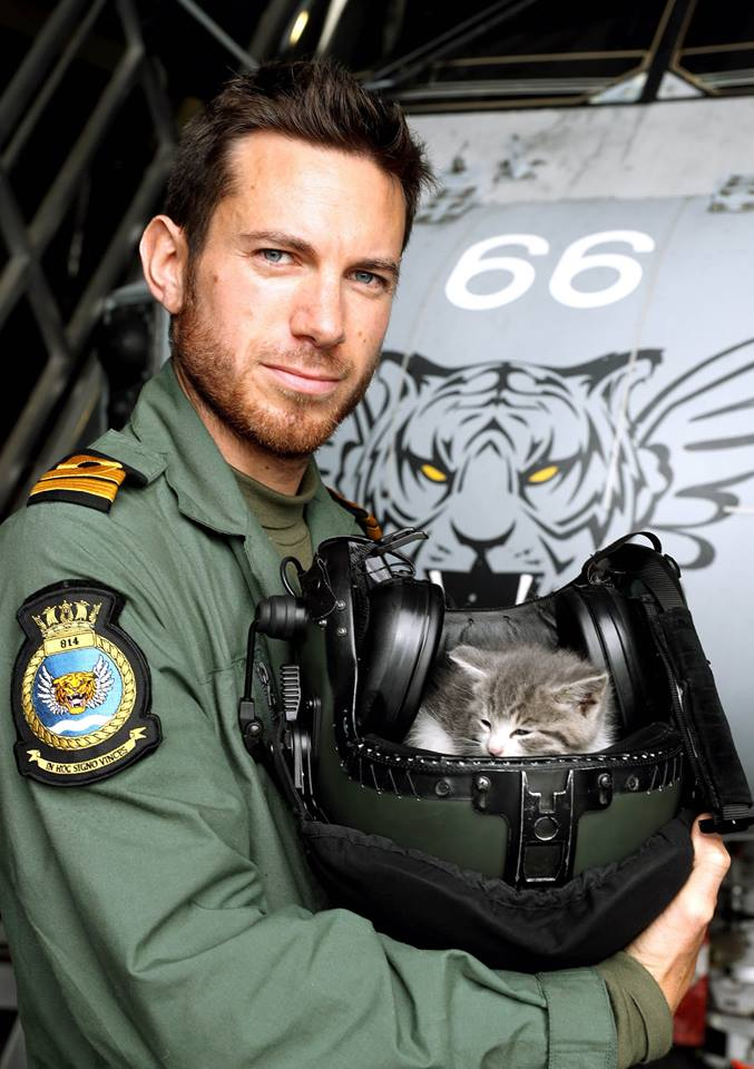 Navy pilot rescues kitten