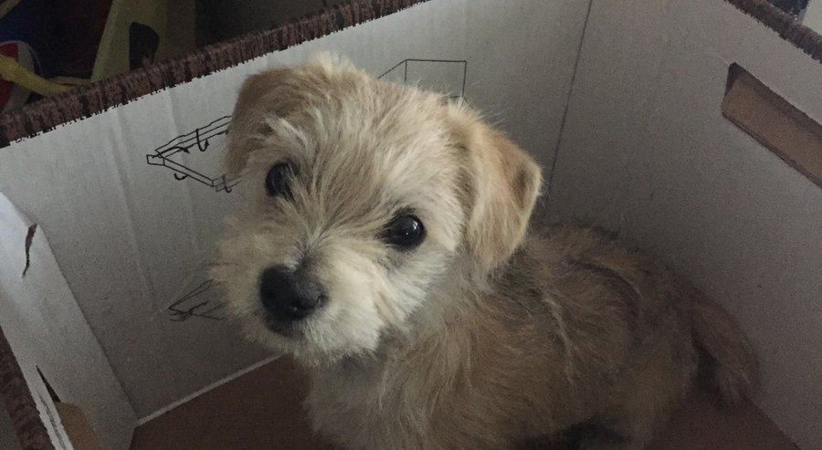 puppy saved by UPS driver