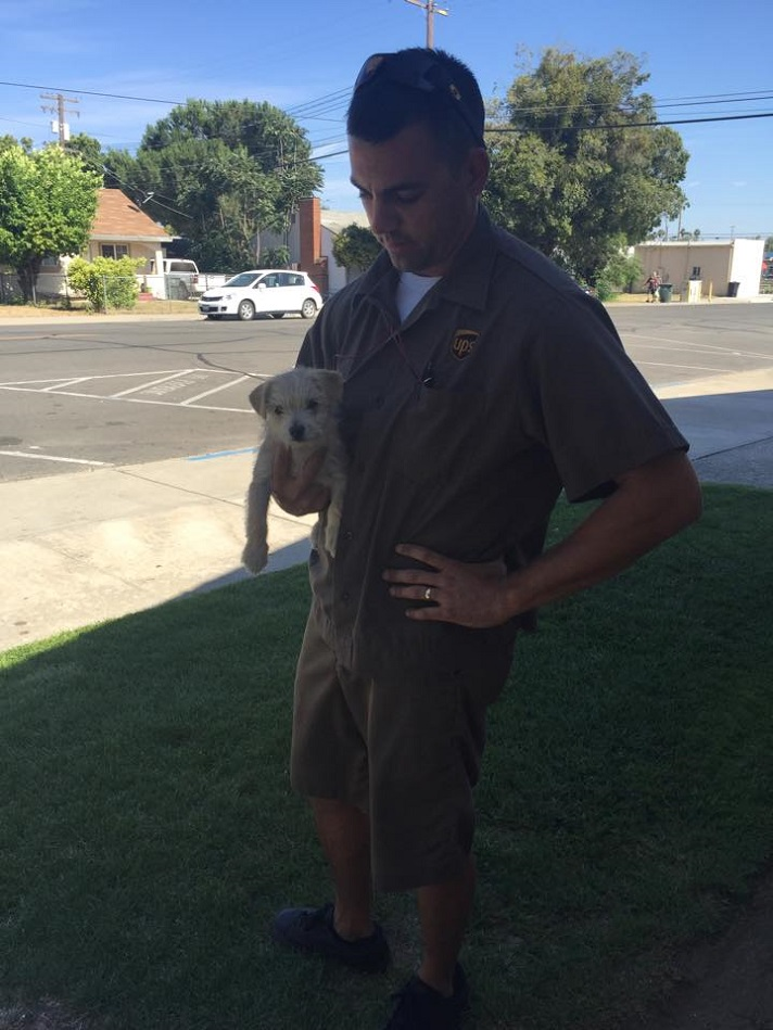 UPS driver and puppy