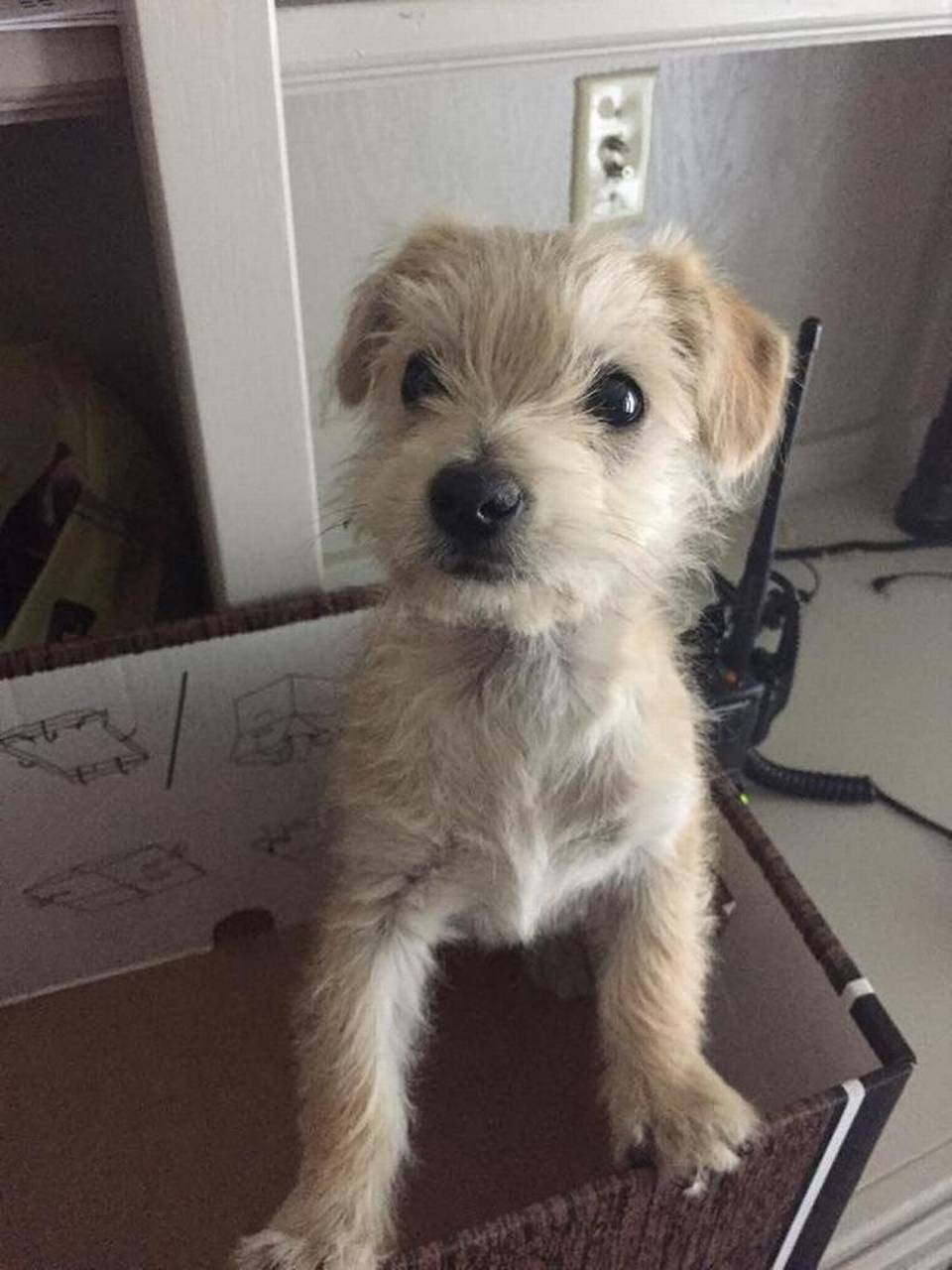 puppy rescued by UPS driver