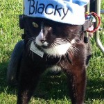Blacky the cat