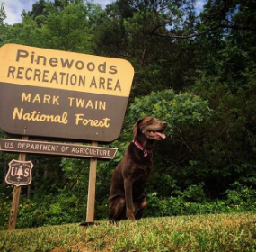 Bella visiting the Mark Twain National Forest